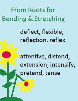 English words from the Latin roots for bend and stretch: deflect, flexible, reflection, attentive, distend, extension, etc.