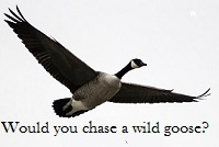 A wild goose flying, with the question
