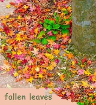 fallen leaves under a tree