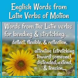 Picture of sunflowers with text: Words from the Latin roots for bending & stretching: deflect, flexible, & reflection, attentive (stretching toward someone), distended, extend, & tension...