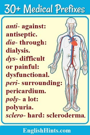 Image of a human body showing the circulatory system, with a list of medical prefixes, their meanings, & examples on its left. (anti- against: antiseptic, dia- through: dialysis, etc.)
