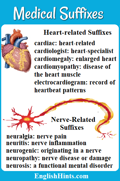 Pictures of a heart and a neuron. 'Heart-related suffixes cardiac: heart-related, cardiologist: heart specialist, ' (etc.) Nerve-related Suffixes neuralgia- nerve pain,' etc.